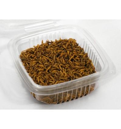 Vers de farine mini (taille 0,5 à 0,9 cm)