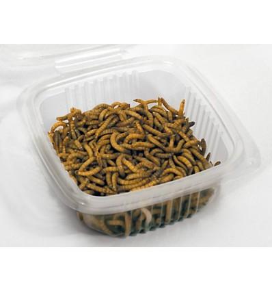 Vers de farine grand (taille 1,5 à 2 cm)