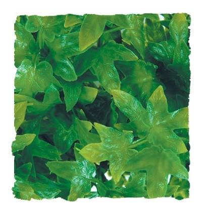 Plante Congo Ivy déco pour terrarium 46cm