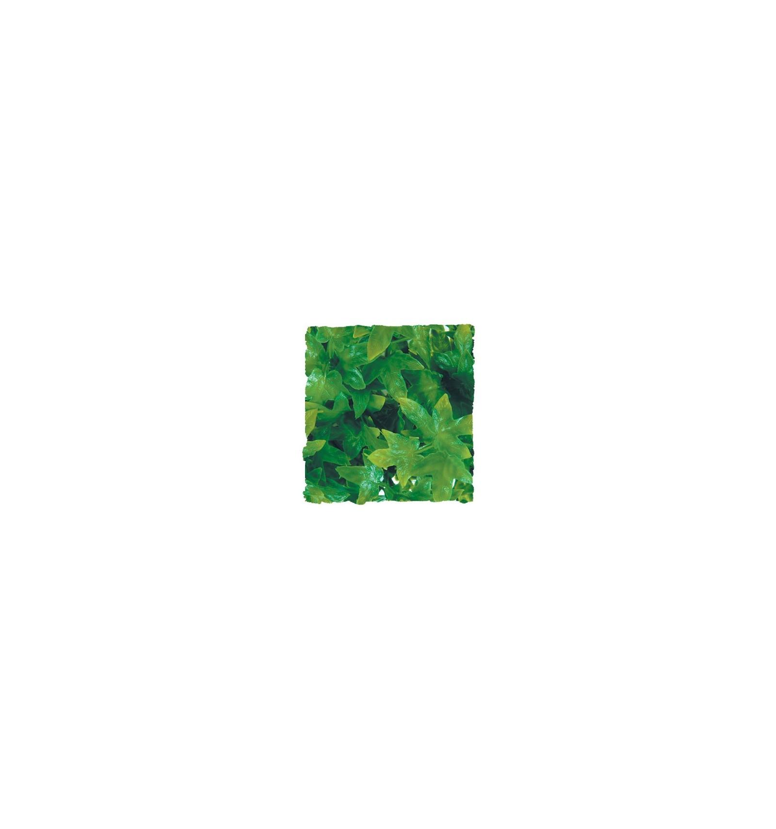 plante congo ivy d co pour terrarium 46cm. Black Bedroom Furniture Sets. Home Design Ideas