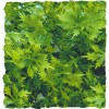 Plante Australian Maple déco pour terrarium 46cm