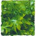 Plante Cannabis déco pour terrarium 46cm