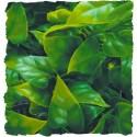 Plante Mexican Phyllo déco pour terrarium 56cm
