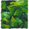 Plante Mexican Phyllo déco pour terrarium 46cm