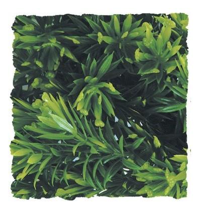 Plante Borneo Star déco pour terrarium 56cm