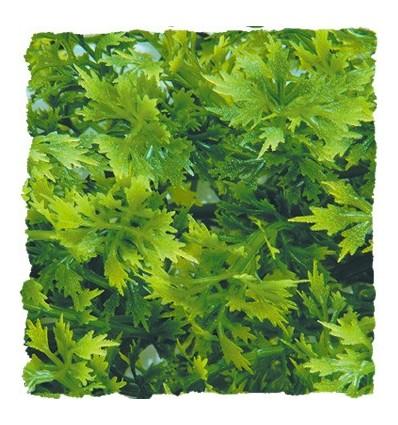 Plante Australian Maple déco pour terrarium 56cm