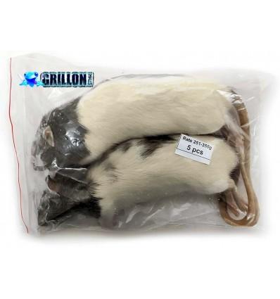 Rats congelés Taille XXL 251 à 350g en sac de 2