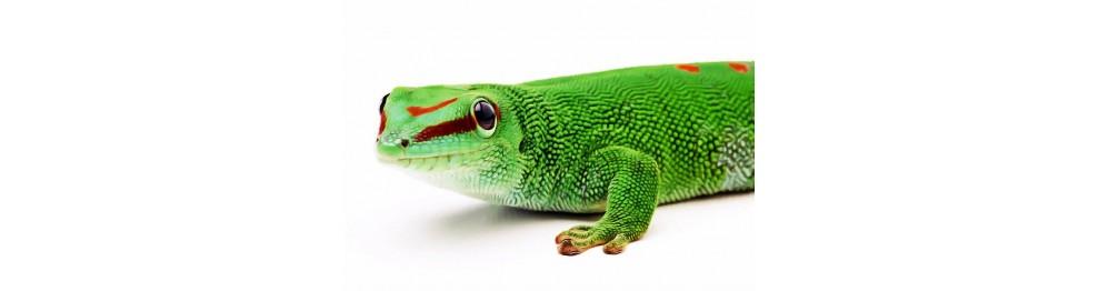 Tout pour les lézards tropicaux